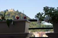 Monte Mario fiori compressi