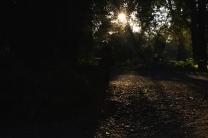 Ombre e foliage comp